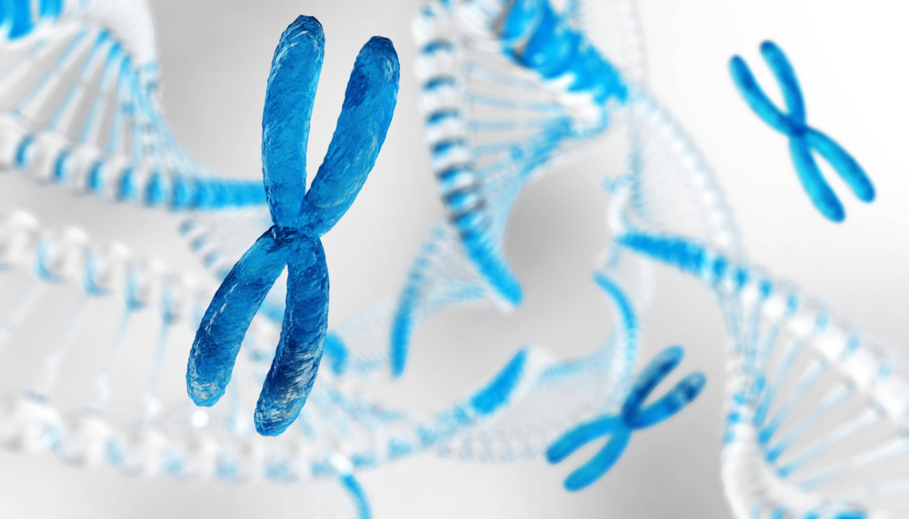 a picture of a chromosome